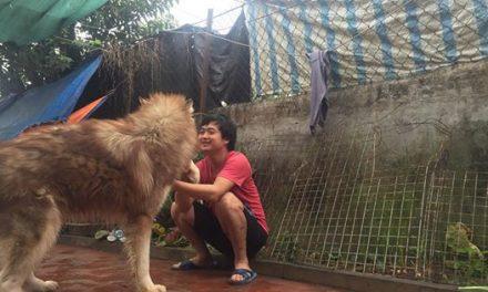 15 điều răn người nuôi chó alaska nên biết