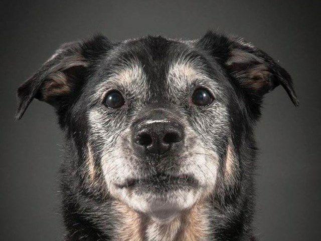 Tự sự của một cô chó tại một vùng quê nghèo